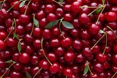 Feche acima da pilha de cerejas maduras com hastes e folhas Imagens de Stock Royalty Free
