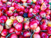 Feche acima da pilha de cerejas maduras com hastes e folhas Grande coleção de cerejas vermelhas frescas Imagem de Stock Royalty Free