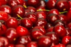 Feche acima da pilha de cerejas maduras com hastes Grande coleção de cerejas vermelhas frescas Fundo maduro das cerejas Fotografia de Stock Royalty Free