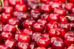 Feche acima da pilha de cerejas maduras com hastes Grande coleção de cerejas vermelhas frescas Fundo maduro das cerejas Imagens de Stock Royalty Free