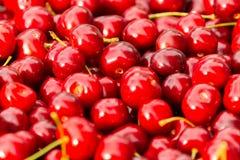 Feche acima da pilha de cerejas maduras com hastes Grande coleção de cerejas vermelhas frescas Fundo maduro das cerejas Imagens de Stock