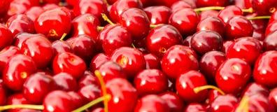 Feche acima da pilha de cerejas maduras com hastes Grande coleção de cerejas vermelhas frescas Fundo maduro das cerejas Imagem de Stock Royalty Free