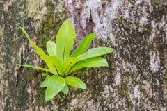 Samambaia que cresce em uma árvore Fotografia de Stock Royalty Free