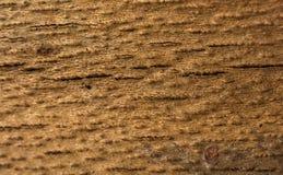 Feche acima da textura da casca de árvore como um fundo foto de stock royalty free