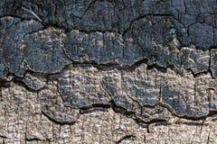 Feche acima da textura da casca de árvore como um fundo fotografia de stock royalty free