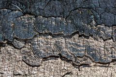 Feche acima da textura da casca de árvore como um fundo fotografia de stock