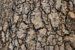 Feche acima da textura da árvore Imagens de Stock Royalty Free