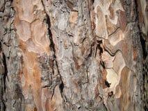 Feche acima da textura da pele da árvore Fotos de Stock