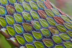 Feche acima da textura da pele de serpente Imagem de Stock