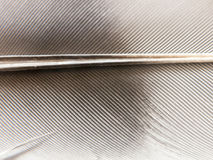 Feche acima da textura de uma pena preto e branco do ` s do pássaro Foto de Stock Royalty Free