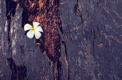 Feche acima da textura do uso de madeira como o fundo natural foto de stock