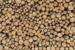 Feche acima da textura dos logs p do pinho, seção do tronco com anéis anuais Imagem de Stock Royalty Free
