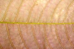 Feche acima da textura marrom da folha Imagem de Stock