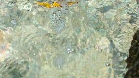 Feche acima da vista da água clara de fluxo e acene em torno da pedra da cama de rio laço filme