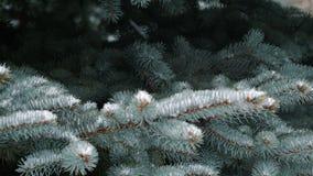 Feche acima da vista da neve que cai em ramos do pinheiro filme