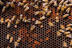 Feche acima da vista das abelhas de trabalho e do pólen recolhido no ho Fotografia de Stock