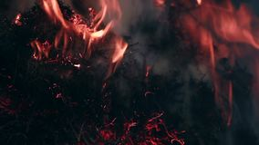 Feche acima da vista na grama seca que queima-se no incêndio florestal vídeos de arquivo