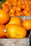 Feche acima das abóboras para a venda em um remendo da abóbora no outono fotografia de stock royalty free