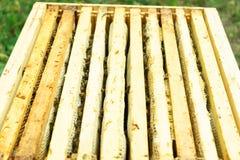 Feche acima das abelhas em quadros de madeira da colmeia no apiário fotografia de stock royalty free