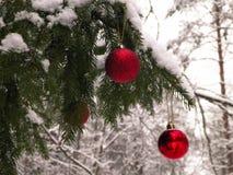 Feche acima das bolas vermelhas do Natal na floresta do inverno fotos de stock