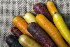 Feche acima das cenouras Multi-coloridas Fotos de Stock
