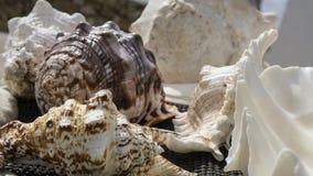 Feche acima das conchas do mar com detalhe em formas imagens de stock