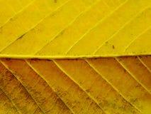 Feche acima das cores coloridas da folha das texturas foto de stock royalty free