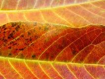 Feche acima das cores coloridas da folha das texturas Fotos de Stock Royalty Free