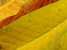 Feche acima das cores coloridas da folha das texturas Foto de Stock
