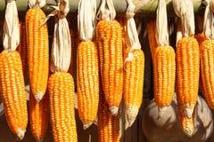 Feche acima das espigas de milho secadas Foto de Stock Royalty Free