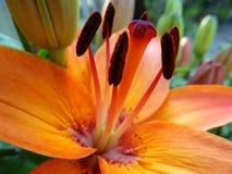 Feche acima das flores imagem de stock royalty free