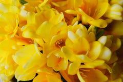 Feche acima das flores amarelas da mola imagem de stock