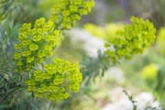 Feche acima das flores bonitas verdes no parque fotos de stock