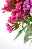 Feche acima das flores com fundo branco Foto de Stock