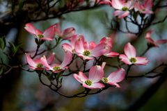 Feche acima das flores da flor da mola Fotos de Stock