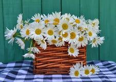 Feche acima das flores da margarida no vime Imagens de Stock