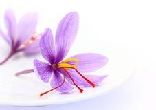 Feche acima das flores do açafrão Fotografia de Stock