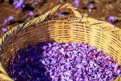 Feche acima das flores do açafrão em uma cesta de vime Foto de Stock
