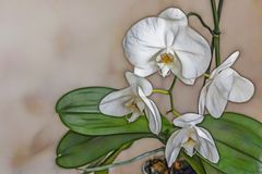 Feche acima das flores das orquídeas na natureza ilustração royalty free