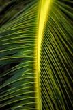 Feche acima das folhas da palmeira fotos de stock royalty free