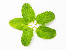 Feche acima das folhas de hortelã fresca no fundo branco Fotos de Stock
