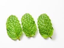 Feche acima das folhas de hortelã fresca no fundo branco Foto de Stock