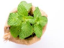 Feche acima das folhas de hortelã fresca no saco no fundo branco Foto de Stock Royalty Free