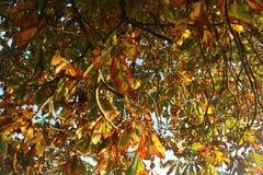 Feche acima das folhas de outono Fotografia de Stock Royalty Free
