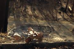 Feche acima das folhas do marrom do outono Fotos de Stock Royalty Free
