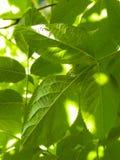 Feche acima das folhas verdes como o fundo da natureza fotos de stock