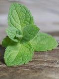 Feche acima das folhas verdes frescas da pastilha de hortelã Ervas da hortelã na tabela de madeira do vintage Foto de Stock