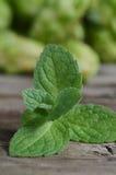 Feche acima das folhas verdes frescas da pastilha de hortelã Ervas da hortelã na tabela de madeira do vintage Imagem de Stock