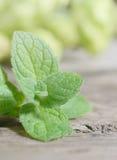Feche acima das folhas verdes frescas da pastilha de hortelã Ervas da hortelã na tabela de madeira do vintage Fotos de Stock Royalty Free