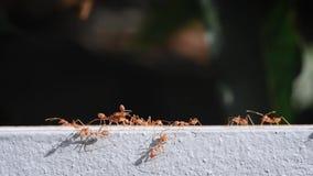 Feche acima das formigas andam em Grey Wall filme